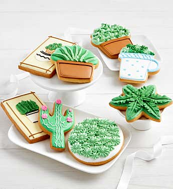 Frosted Succulent Cookies