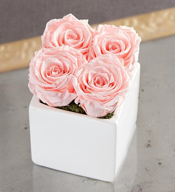 Preserved Pink Roses by Luxe Bloom  Small