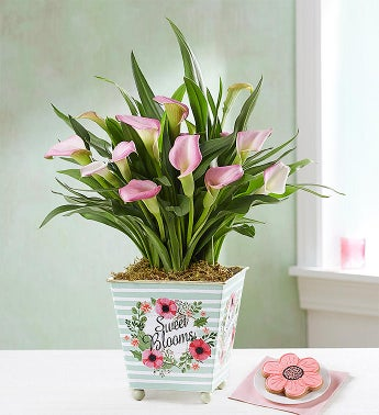 Sweet Blooms Calla Lily