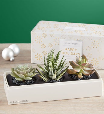 Holiday Succulents by Lulas Garden