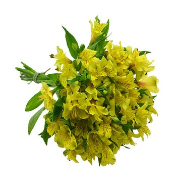 10 Stems of Yellow Alstroemeria