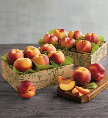 Oregold174 Peaches and Nectarines
